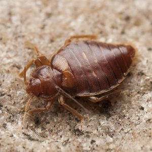 Cost of Bed Bug Treatment UK